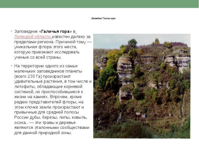 """Заповедник """"Галичья гора» Заповедник «Галичья гора» вЛипецкой областиизвестен далеко за пределами региона. Причиной тому — уникальная флора этого места, которую приезжают исследовать ученые со всей страны. На территории одного из са…"""