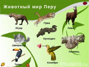 Животный мир Перу