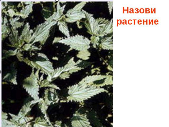 Назови растение