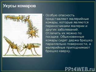 Особую опасность представляют малярийные комары, которые являются переносчиками