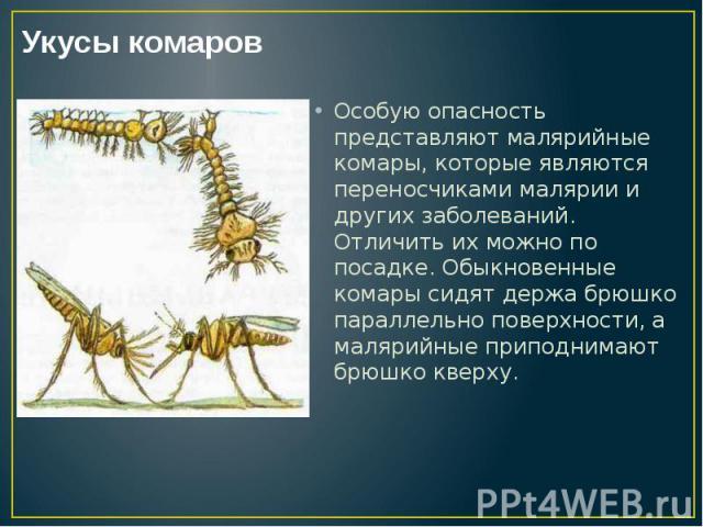 Особую опасность представляют малярийные комары, которые являются переносчиками малярии и других заболеваний. Отличить их можно по посадке. Обыкновенные комары сидят держа брюшко параллельно поверхности, а малярийные приподнимают брюшко кверху. Особ…