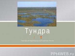 Тундра Природный территориальный комплекс России