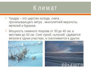 Климат Тундра – это царство холода ,снега , пронизывающего ветра , многолетней м