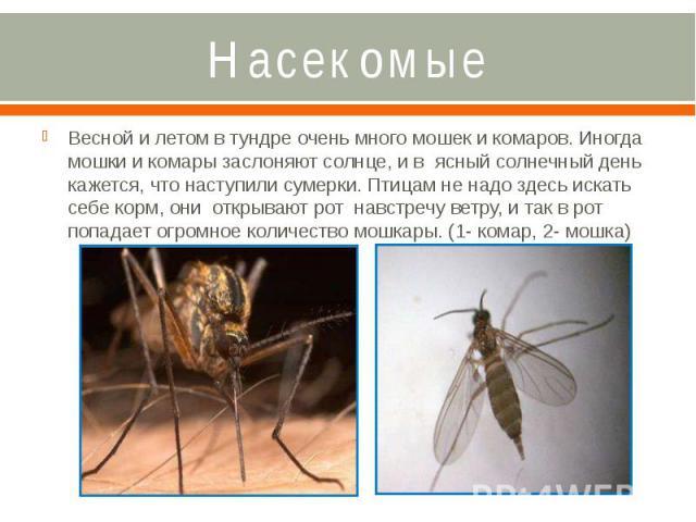 Насекомые Весной и летом в тундре очень много мошек и комаров. Иногда мошки и комары заслоняют солнце, и в ясный солнечный день кажется, что наступили сумерки. Птицам не надо здесь искать себе корм, они открывают рот навстречу ветру, и так в рот поп…