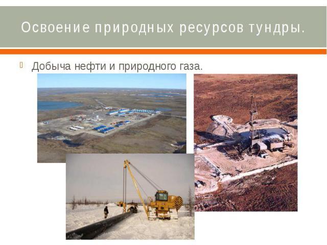 Освоение природных ресурсов тундры. Добыча нефти и природного газа.
