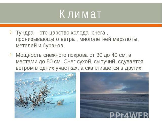 Климат Тундра – это царство холода ,снега , пронизывающего ветра , многолетней мерзлоты, метелей и буранов. Мощность снежного покрова от 30 до 40 см, а местами до 50 см. Снег сухой, сыпучий, сдувается ветром в одних участках, а скапливается в других.