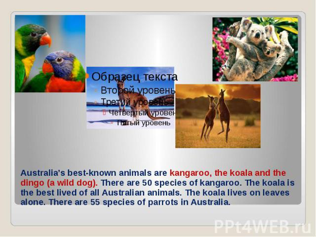 Australia's best-known animals are kangaroo, the koala and the dingo (a wild dog). There are 50 species of kangaroo. The koala is the best lived of all Australian animals. The koala lives on leaves alone. There are 55 species of parrots in Australia.