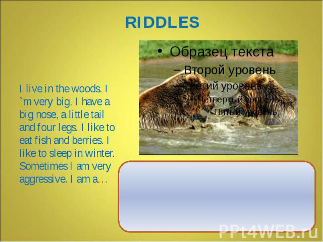 I live in the woods. I `m very big. I have a big nose, a little tail and four legs. I like to eat fish and berries. I like to sleep in winter. Sometimes I am very aggressive. I am a…