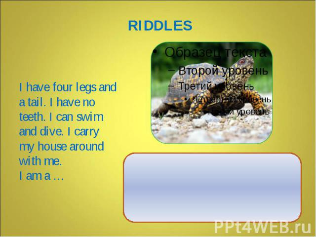 I have four legs and a tail. I have no teeth. I can swim and dive. I carry my house around with me. I am a …