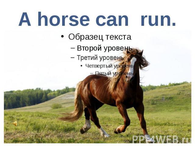 A horse can run.