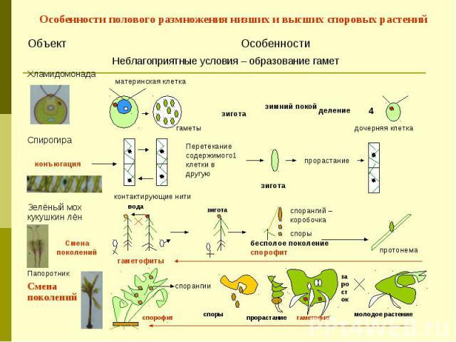 Особенности полового размножения низших и высших споровых растений