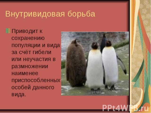 Внутривидовая борьба Приводит к сохранению популяции и вида за счёт гибели или неучастия в размножении наименее приспособленных особей данного вида.