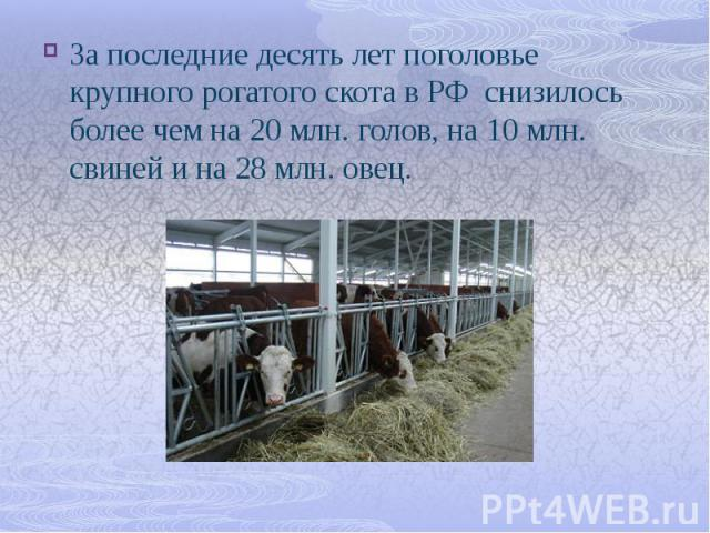 За последние десять лет поголовье крупного рогатого скота в РФ снизилось более чем на 20 млн. голов, на 10 млн. свиней и на 28 млн. овец. За последние десять лет поголовье крупного рогатого скота в РФ снизилось более чем на 20 млн. голов, на 10 млн.…