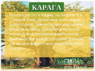 Карагач растет в Крыму, на Кавказе и в Средней Азии. Древесина красновато-бурого