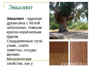 Эвкалипт - ядровая древесина с белой заболонью, темным красно-коричневым ядром.