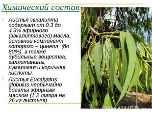 Листья эвкалипта содержат от 0,3 до 4,5% эфирного (эвкалиптового) масла, основно