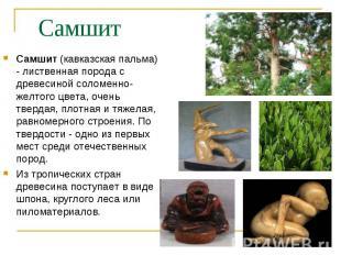 Самшит (кавказская пальма) - лиственная порода с древесиной соломенно-желтого цв