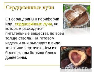 От сердцевины к периферии идут сердцевинные лучи, по которым расходятся питатель