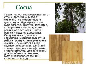 Сосна - самая распространенная в стране древесина. Мягкая, заболонь - желтовато-