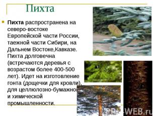 Пихта распространена на северо-востоке Европейской части России, таежной части С