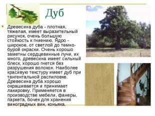Древесина дуба - плотная, тяжелая, имеет выразительный рисунок, очень большую ст