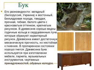 Его разновидности: западный (Белоруссия, Украина) и восточный. Безъядровая пород