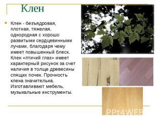 Клен - безъядровая, плотная, тяжелая, однородная с хорошо развитыми сердцевинным