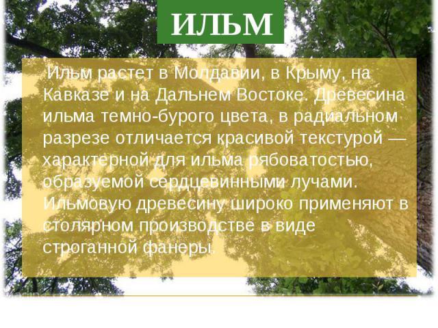 Ильм растет в Молдавии, в Крыму, на Кавказе и на Дальнем Востоке. Древесина ильма темно-бурого цвета, в радиальном разрезе отличается красивой текстурой — характерной для ильма рябоватостью, образуемой сердцевинными лучами. Ильмовую древесину широко…