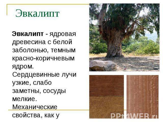 Эвкалипт - ядровая древесина с белой заболонью, темным красно-коричневым ядром. Сердцевинные лучи узкие, слабо заметны, сосуды мелкие. Механические свойства, как у клена. Эвкалипт - ядровая древесина с белой заболонью, темным красно-коричневым ядром…