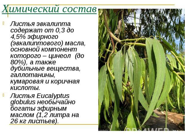 Листья эвкалипта содержат от 0,3 до 4,5% эфирного (эвкалиптового) масла, основной компонент которого – цинеол (до 80%), а также дубильные вещества, галлотанины, кумаровая и коричная кислоты. Листья эвкалипта содержат от 0,3 до 4,5% эфирного (эвкалип…