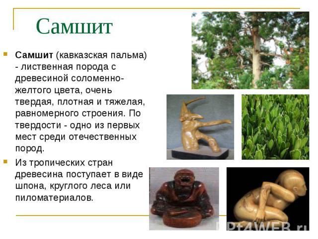 Самшит (кавказская пальма) - лиственная порода с древесиной соломенно-желтого цвета, очень твердая, плотная и тяжелая, равномерного строения. По твердости - одно из первых мест среди отечественных пород. Самшит (кавказская пальма) - лиственная пород…