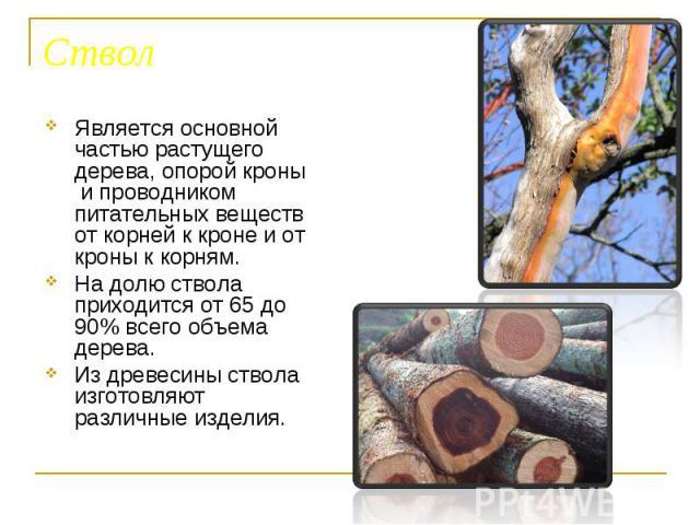 Является основной частью растущего дерева, опорой кроны и проводником питательных веществ от корней к кроне и от кроны к корням. Является основной частью растущего дерева, опорой кроны и проводником питательных веществ от корней к кроне и от кроны к…