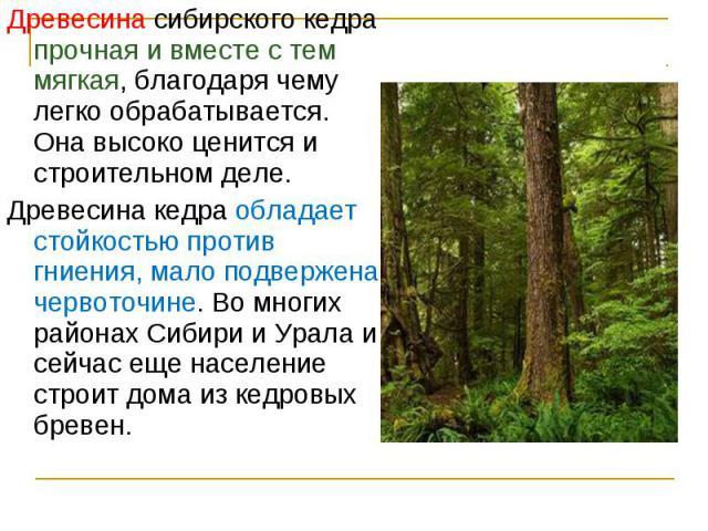 Древесина сибирского кедра прочная и вместе с тем мягкая, благодаря чему легко обрабатывается. Она высоко ценится и строительном деле. Древесина сибирского кедра прочная и вместе с тем мягкая, благодаря чему легко обрабатывается. Она высоко ценится …