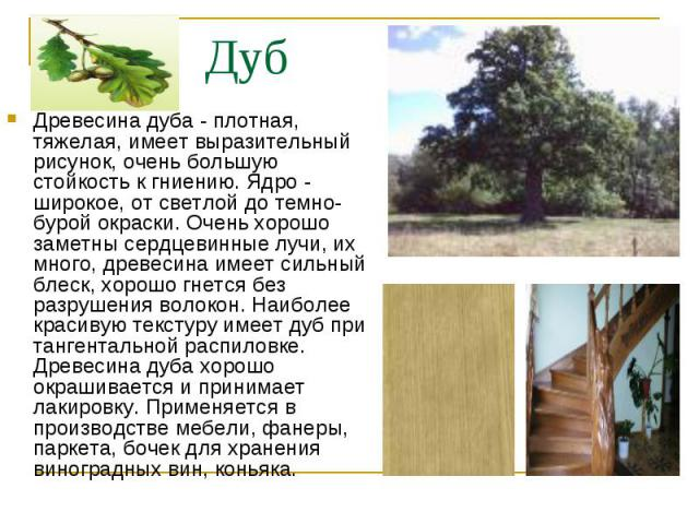 Древесина дуба - плотная, тяжелая, имеет выразительный рисунок, очень большую стойкость к гниению. Ядро - широкое, от светлой до темно-бурой окраски. Очень хорошо заметны сердцевинные лучи, их много, древесина имеет сильный блеск, хорошо гнется без …