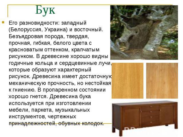 Его разновидности: западный (Белоруссия, Украина) и восточный. Безъядровая порода, твердая, прочная, гибкая, белого цвета с красноватым оттенком, крапчатым рисунком. В древесине хорошо видны годичные кольца и сердцевинные лучи, которые образуют хара…