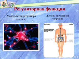 Модель белка-регулятора (гормон) Модель белка-регулятора (гормон)