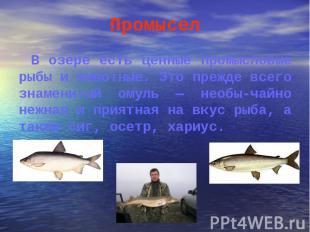 В озере есть ценные промысловые рыбы и животные. Это прежде всего знаменитый ому