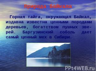 Горная тайга, окружающая Байкал, издавна известна ценными породами деревьев, бог
