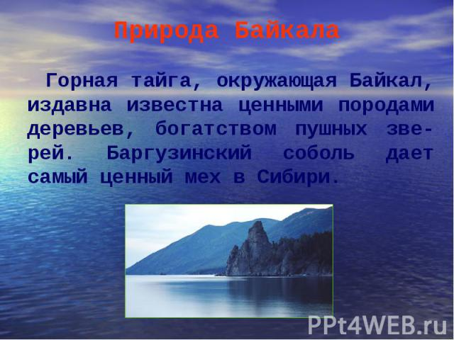 Горная тайга, окружающая Байкал, издавна известна ценными породами деревьев, богатством пушных зве-рей. Баргузинский соболь дает самый ценный мех в Сибири. Горная тайга, окружающая Байкал, издавна известна ценными породами деревьев, богатством пушны…
