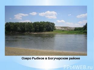 Озеро Рыбное в Богучарском районе