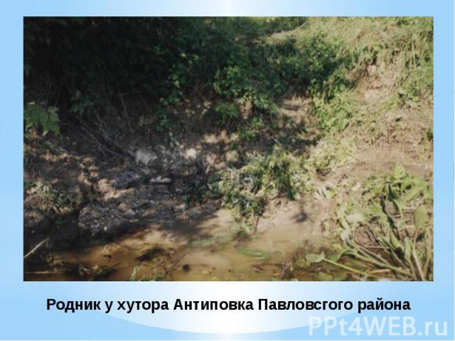 Родник у хутора Антиповка Павловсгого района