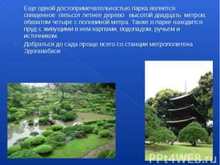 Еще одной достопримечательностью парка является священное пятьсот летнее д