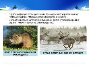 В ряде районов есть заказники, где охраняют и размножают пушных зверей, имеющих