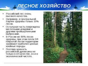 ЛЕСНОЕ ХОЗЯЙСТВО Российский лес очень высокого качества. Например, в Центральной