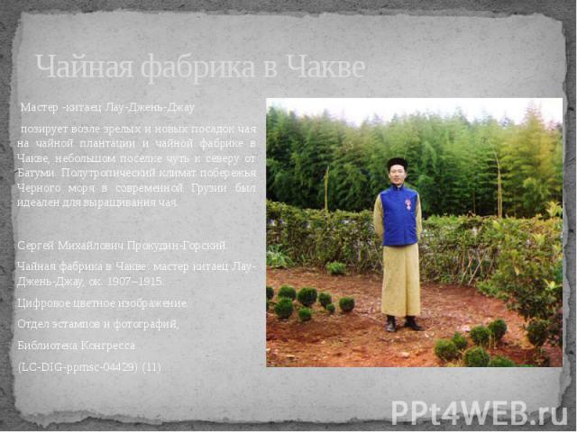 Чайная фабрика в Чакве Мастер -китаец Лау-Джень-Джау позирует возле зрелых и новых посадок чая на чайной плантации и чайной фабрике в Чакве, небольшом поселке чуть к северу от Батуми. Полутропический климат побережья Черного моря в современной Грузи…