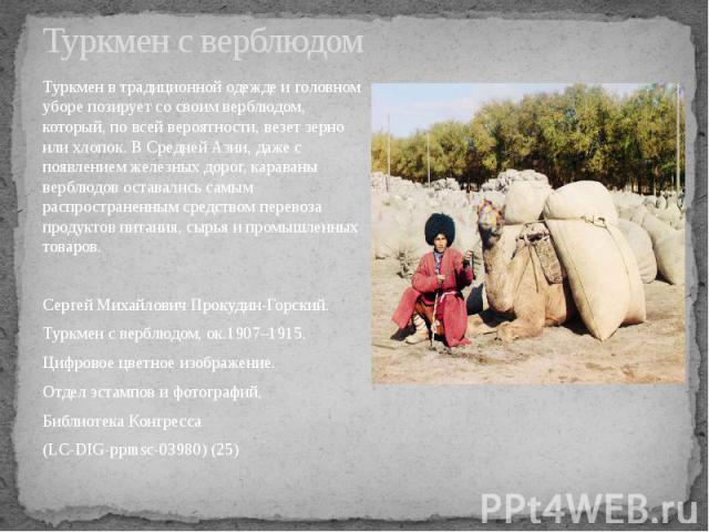 Туркмен с верблюдом Туркмен в традиционной одежде и головном уборе позирует со своим верблюдом, который, по всей вероятности, везет зерно или хлопок. В Средней Азии, даже с появлением железных дорог, караваны верблюдов оставались самым распространен…