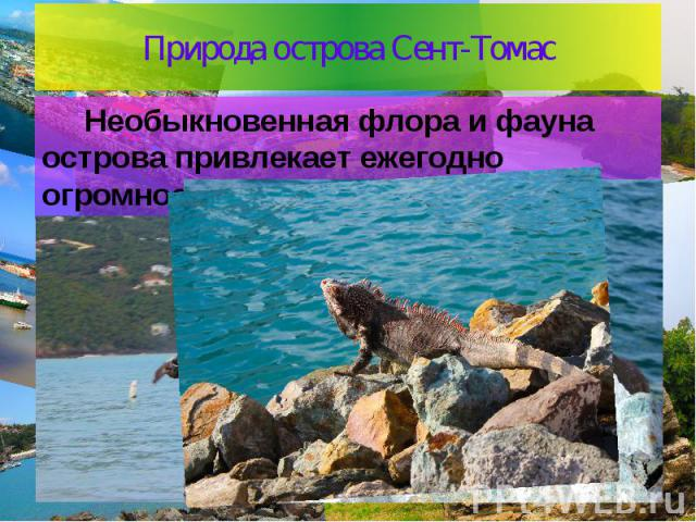Природа острова Сент-Томас Необыкновенная флора и фауна острова привлекает ежегодно огромное количество туристов.