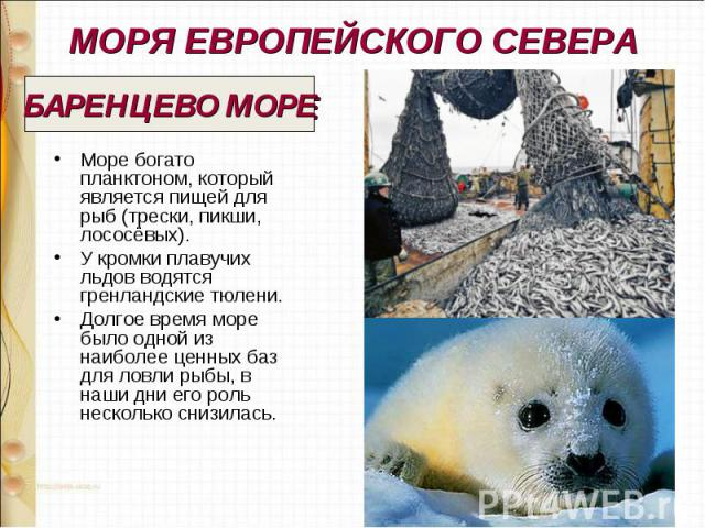 МОРЯ ЕВРОПЕЙСКОГО СЕВЕРА Море богато планктоном, который является пищей для рыб (трески, пикши, лососёвых). У кромки плавучих льдов водятся гренландские тюлени. Долгое время море было одной из наиболее ценных баз для ловли рыбы, в наши дни его роль …