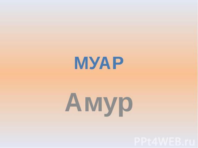 МУАР Амур