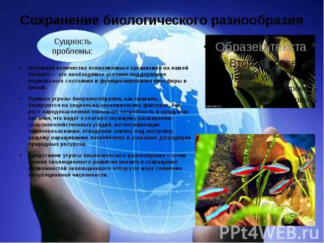 Сохранение биологического разнообразия Огромное количество всевозможных организмов на нашей планете — это необходимое условие поддержания нормального состояния и функционирования биосферы в целом. Прямые угрозы биоразнообразию, как правило, базируют…